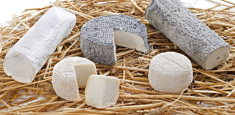 a variety of goat's milk cheeses arranged on fresh straw